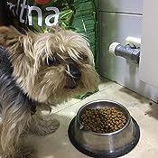 Ultima Pienso para Perros Yorkshire Terrier con Pollo - Pack de 8 x 800 g, Total: 6.4 kg