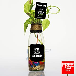 """MAGIC BOTTLES Recycled """"Grow Together"""" Planters Glass Pot for Indoor Plant with (Free Plant Tags)"""