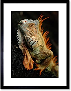 The Art Stop Photo Animal Iguana Lizard Reptile Scales SPINES Framed Print F97X5215