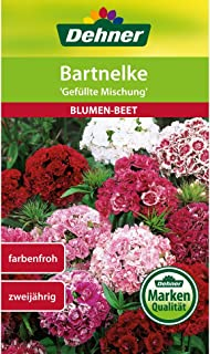 Dehner Blumen-Saatgut, Bartnelke, Gefüllte Mischung, 5er pack 5 x 1.3 g