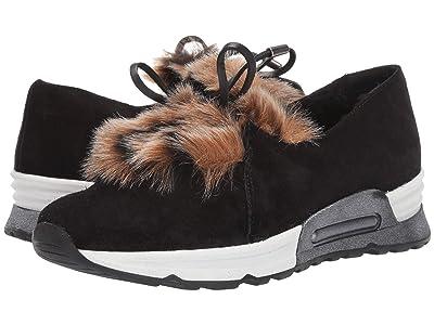 Sesto Meucci Pegah (CO1 Black Zabby/Beige Pikka Faux Fur/Black Calf) Women