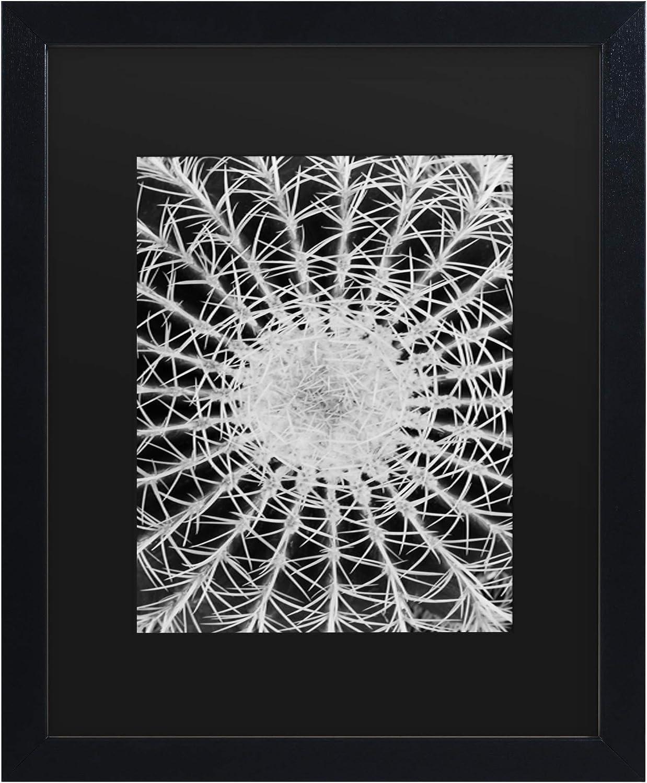 Trademark Fine Art Barrel Cactus by Kurt Shaffer, Matte, Black Frame 11x14
