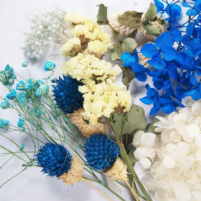 ハッチホールガイドラインハーバリウム花材セット ブルー系(c) 小分け レジン パーツ クラフト あじさい ハーバリウム用 花材 材料 フォトフレーム作り アレンジメント 花資材
