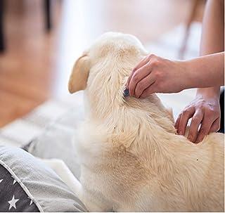 Flöhe - so werden Sie die Plagegeister wirklich los (Hund gesund 1)