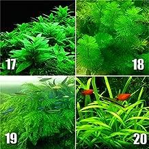 HOTUEEN Water Grass Seed Aquarium Planting Fish Tank Decoration Grass Aquatic Seeds Flowers 300pcs