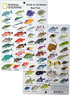 Best caribbean fish identification card Reviews