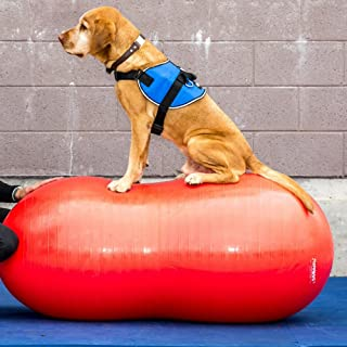 Best fitpaws canine conditioning equipment Reviews