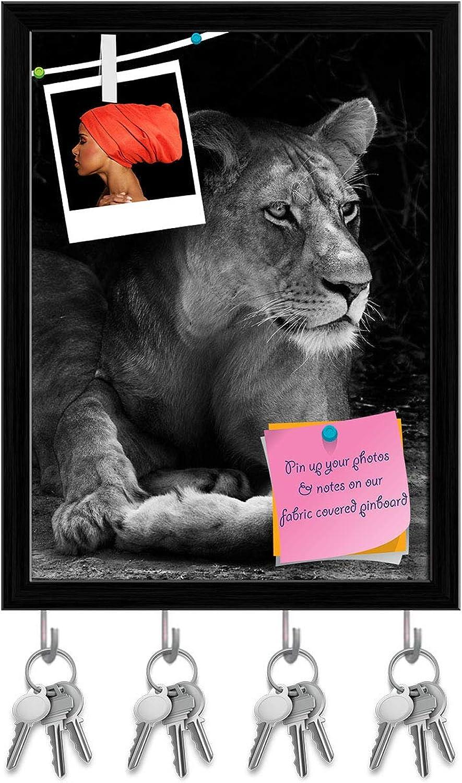 Artzfolio Wild African Lion D2 Key Holder Hooks   Notice Pin Board   Black Frame 12 X 16.1Inch