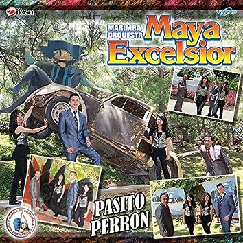 Pasito Perron. Música de Guatemala para los Latinos