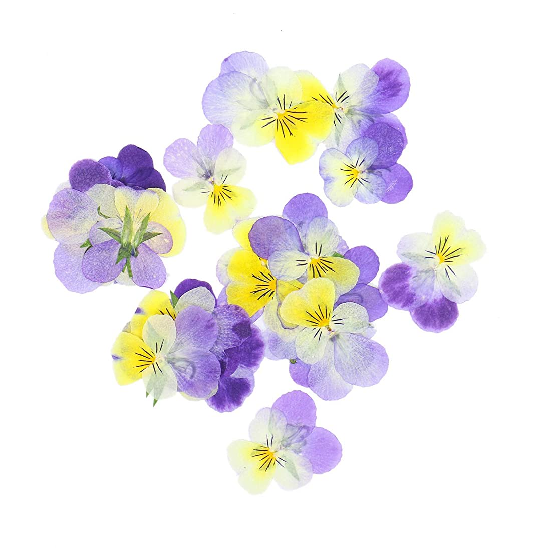 Monrocco 30Pcs Real Pansy Pressed Dried Flowers DIY Preserved Flower Decorations for Resin Jewelry Pendant Crafts DIY Cards Making
