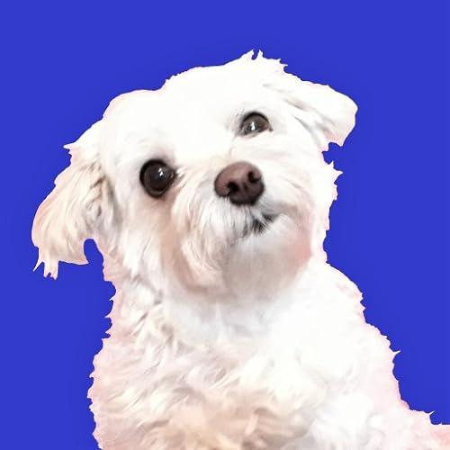 Mischlingshunde Quiz - mit Hunden aus dem Tierheim
