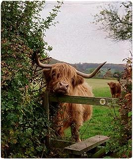 CafePress Highland Cow Soft Fleece Throw Blanket, 50