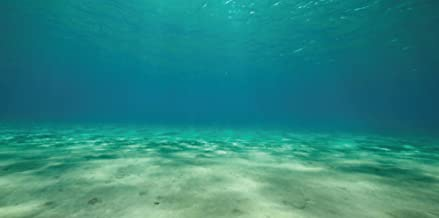 """SPORN Aquarium Background, Static Cling, Ocean Floor 36"""" x 18"""""""