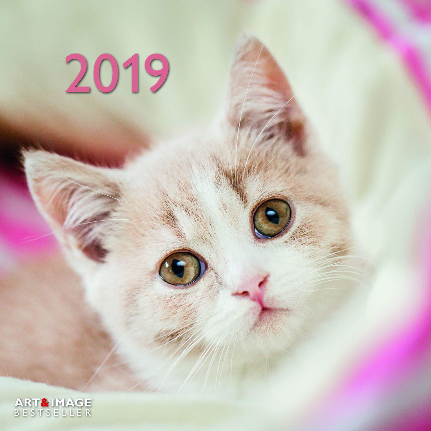Calendario 2019 gato Rigolo con Póster – gato Funny – gato Baille – gato gafas – Leona – formato 30 x 30 cm (TN) + incluye un – Agenda de bolsillo 2019: Amazon.es: Oficina y papelería