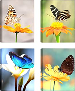 Best watercolor butterfly and flower Reviews