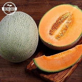 Kajari Melon Seeds