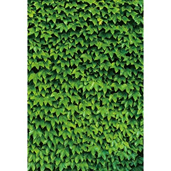 DORCEV 12x8ft Green Leaves Flower Wall Photography Backdrop Red Carpet White Bench Background Wedding Ceremony Birthday Party Decoration Kids Adults Portraits Photo Studio Props