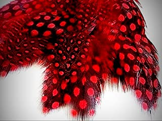 1 Packet of 20 Deep Red Loose Spotted Guinea Hen Crafting Feathers Hand Selected - for DIY Craft Costumes Hats Pens Hair Accessories Trim Mask Wedding Home Party Decorations