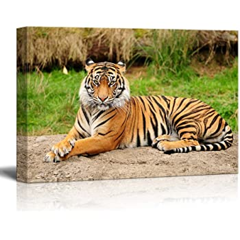 Youkuart Mi5001,black /& White One Panel Wall Art Painting Blue Eyed Tiger Prints on Canvas the Picture Animal Pictures Oil for Home Modern Decoration Print Decor for Kitchen ml5001zfh