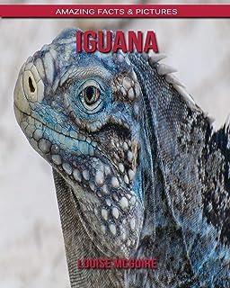 Iguana: Amazing Facts & Pictures