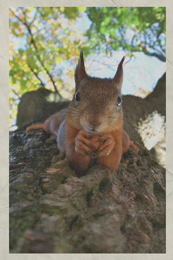 子猫セットする十一2020: Ardilla scoiattolo rosso Terrific Planner Calendar Organizer Daily Weekly Monthly Vintage Retro Poster style for American Red Squirrel Fans