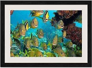Marine Fish - E - Art Print Wall Black Wood Grain Framed Picture(24x16inch)
