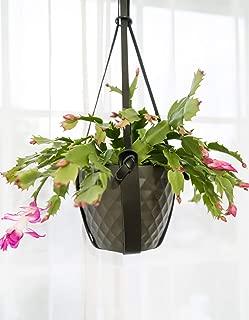 Hanging Planter for Indoor Plants, Minimalist Leather Hanger, Stylish Black Basket, Modern Pot Holder for Flower Pots, Succulent Hanger, Hanging Cactus Stand, Houseplant Decor for Wall or Ceiling