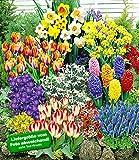 140 Blumenzwiebeln - Spar-Paket