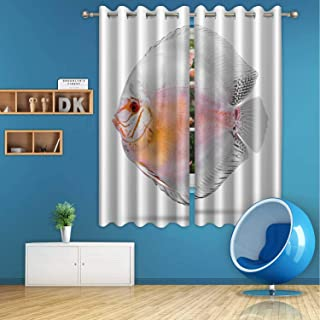 ALUONI Discus Fish Isolated on White Background Digital Art Print Polyester Window Curtains,Clipping Path for Dining Room,59 in Wide x 72 in high