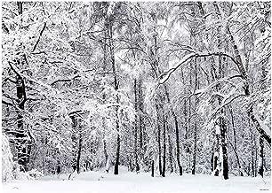 Best birch forest background Reviews