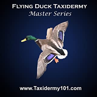 bird taxidermy videos