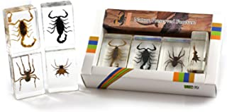 Best insects in glass blocks Reviews