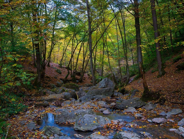 Lais Jigsaw Ardennes brook forest landscape 2000 pieces