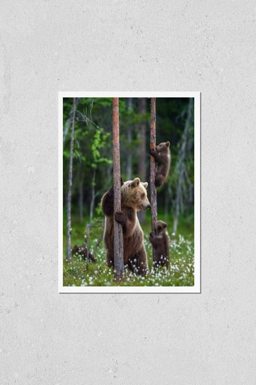 Poster Max 76% OFF Reproduction of She-bear and Popular overseas bear in fore the summer cubs