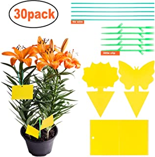 Stingmon 30 Pack Sticky, Fruit Fly and Fungus Gnat Trap Killer Indoor and Outdoor Protect The Plant,Non-Toxic and Odorless, A Variety of Shapes, A5
