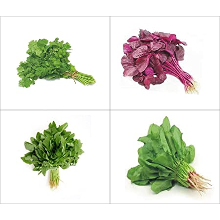 OMG ORGANIC SEEDS ! Organics Leafy Vegetable Seed Kit : Spinach 1000, Red  Amaranthus 1500, Green Amaranthus 1500 & Coriander 1000 Seeds.: Amazon.in:  Garden & Outdoors
