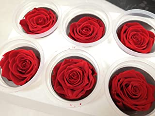 Preserved Roses, Natural Roses That Last for at Least 1 Year, Eternal Everlasting Roses Head, Real Rose Texture/Look,Replace Artificial Flowers Wedding Decorations,no Watering,Non-Toxic(Box of 6-Red)
