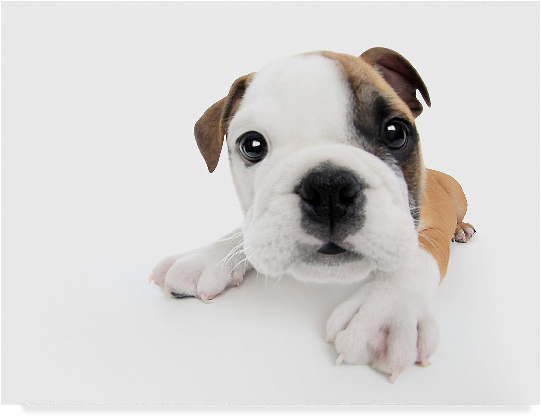 Baby Bulldog by Andrea Mascitti Puppies, 14x19Inch