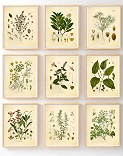 Ink Inc. Set of 9 Herb Botanical Prints, Unframed, 5x7 inch Matte, Thyme, Mint, Rosemary, Parsley, Sage, Fennel, Pepper, Bay, Cumin