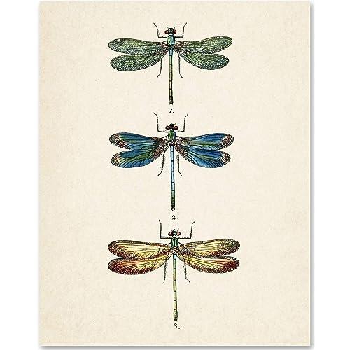 Dragonflies Illustration - 11x14 Unframed Art Print - Makes a Great Home Decor Under $15