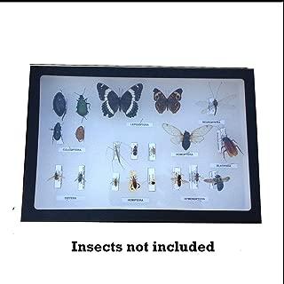 Entomology Display Case