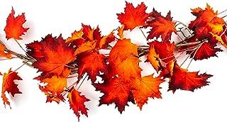 Best asian maple leaf Reviews