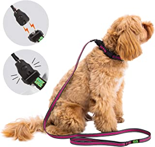 Best large dog harness and leash Reviews