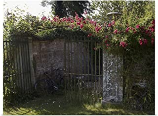 GREATBIGCANVAS Poster Print Pink Climbing Rose Over Wrought Iron Gates by 40