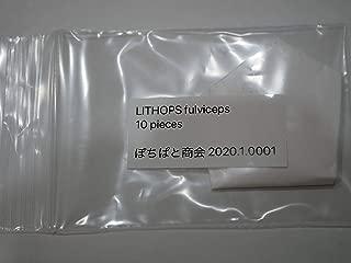 多肉植物 種 LITHOPS リトープスの種10粒 (fulviceps 微紋玉)