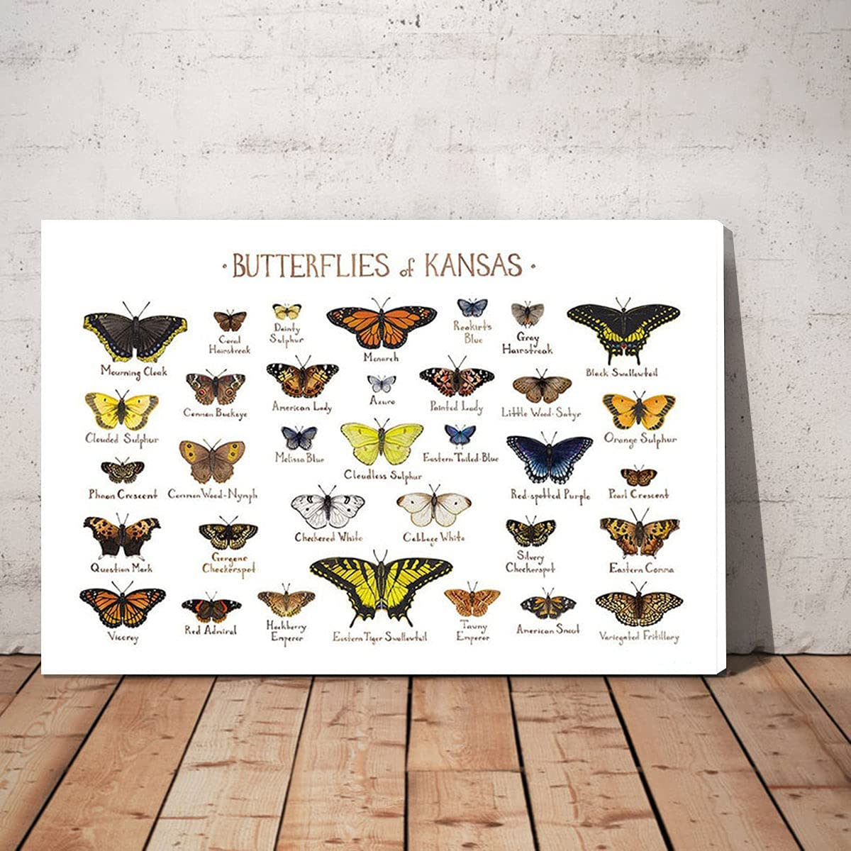LuiV HAM Popular shop is the lowest price challenge Types of Butterflies Knowledge Online limited product Canvas Art o Wall