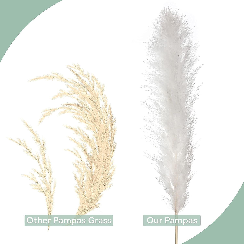 Amazon.com E 21 Ethical Lifestyle Pampas Grass Tall   Bundle of 21 ...