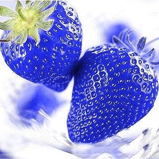 FastDirect Semillas de Fresas Azules Gigantes Frutales