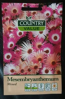 Flower Seeds 'Mesembryanthemum' Mixed Garden Summer Pack