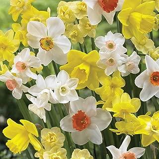 Burpee's Naturalizing Mix Daffodil - 150 Flower Bulbs | Multiple Colors